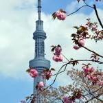 tokyo-sky-tree-vertical